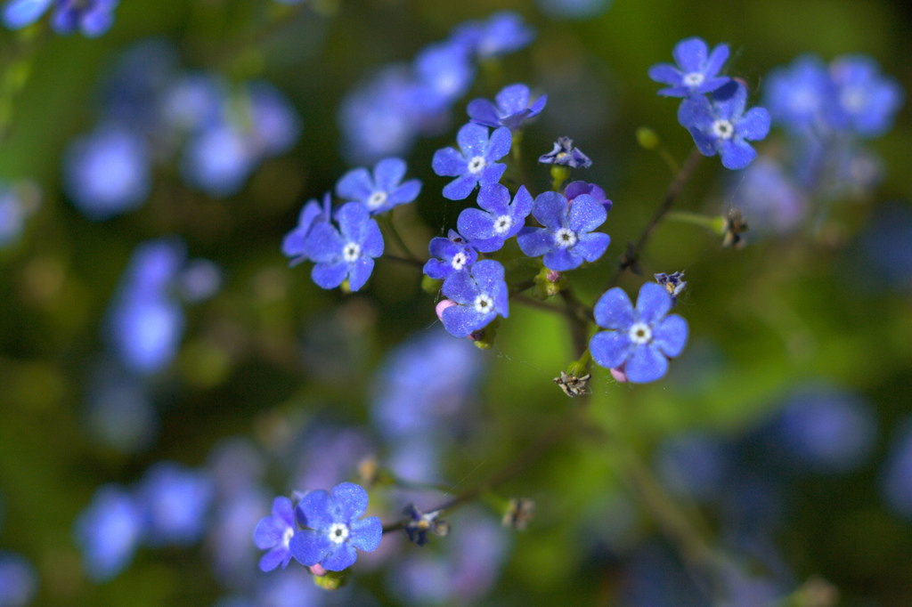 Forget me not (musings on digital forgiveness and online identities after death)