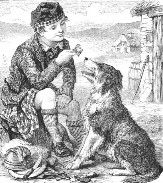By Harrison Weir (1824-1906) [Public domain], via Wikimedia Commons